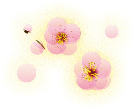 梅,正月,花